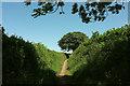 SX8854 : Greenway Walk / John Musgrave Heritage Trail by Derek Harper