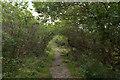 SW7819 : SW Coast Path by habiloid