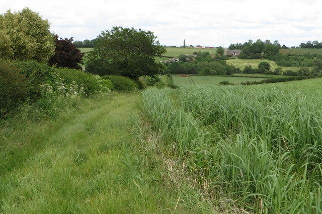 Field hedge by Mill Lane