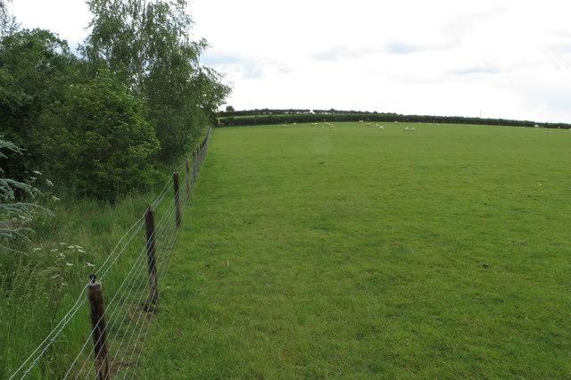 Public footpath through the pasture