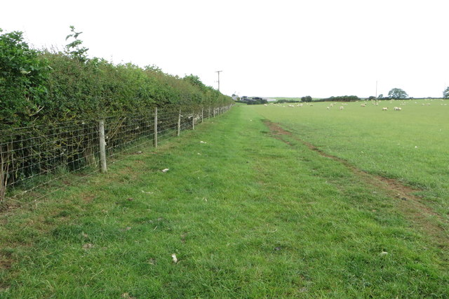 Hedgerow and sheep grazing