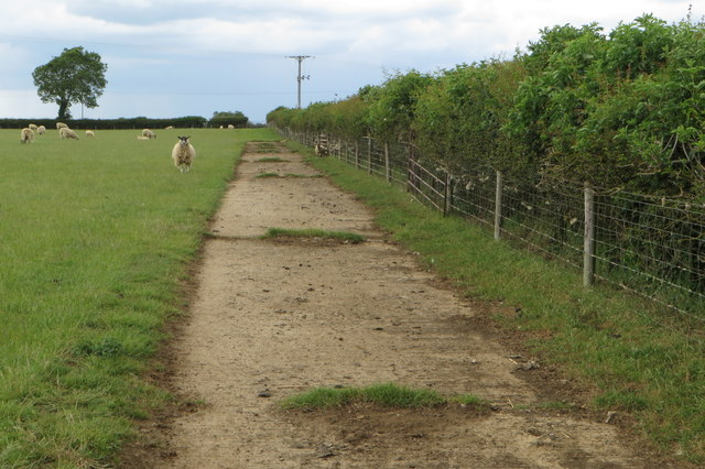 Farm track with sheep