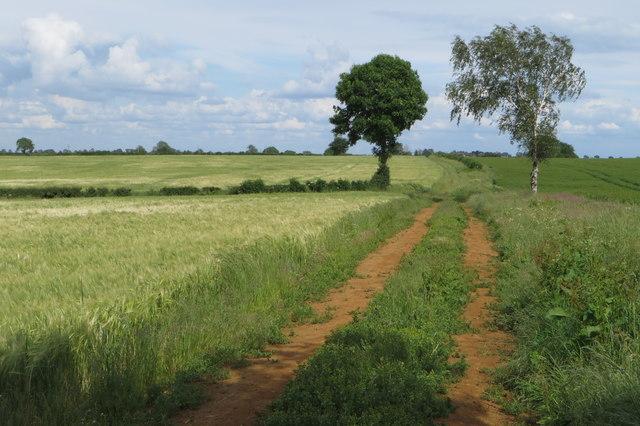 Footpath to Grimscote