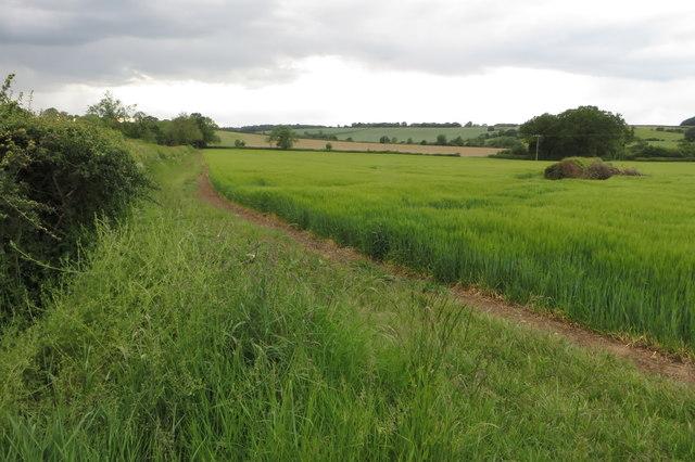 Farmland by Farthingstone Road