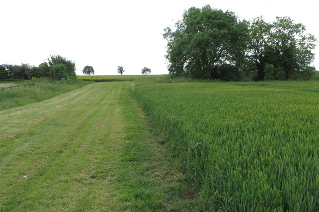 Field by the footpath