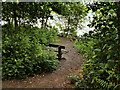 SJ4333 : Seat at the Edge of Cole Mere by David Dixon