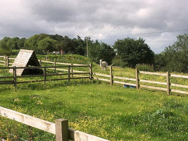 Harmer Hill, The Meadows