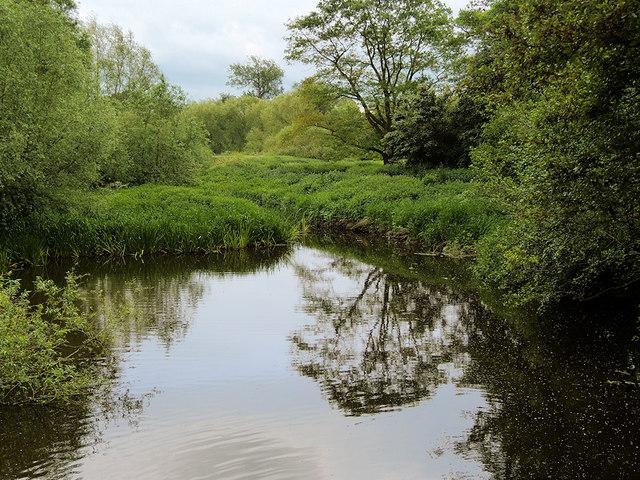 River Tern, Attingham Park