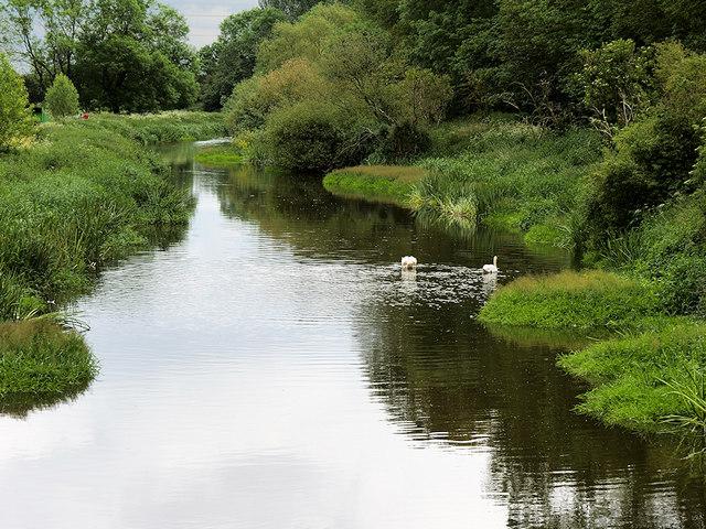 River Tern Upstream from the Suspension Bridge at Attingham Park