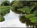 SJ5510 : River Tern Upstream from the Suspension Bridge at Attingham Park by David Dixon