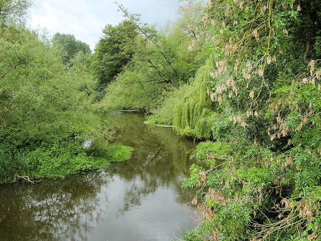 River Tern Downstream from the Suspension Bridge at Attingham Park