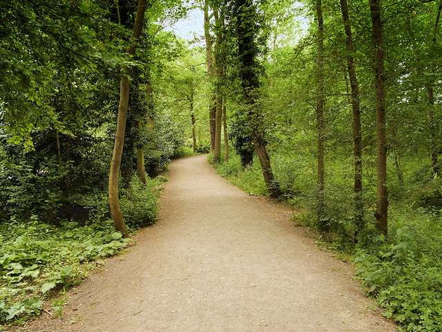 Woodland Path at Attingham Park
