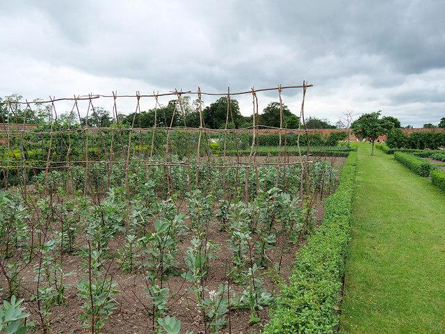 Kitchen Garden, Attingham Park