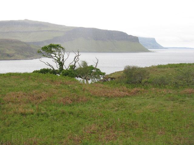 Rough grassland above Loch na Keal