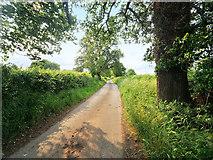 SJ5308 : Minor Road south of Atcham by David Dixon
