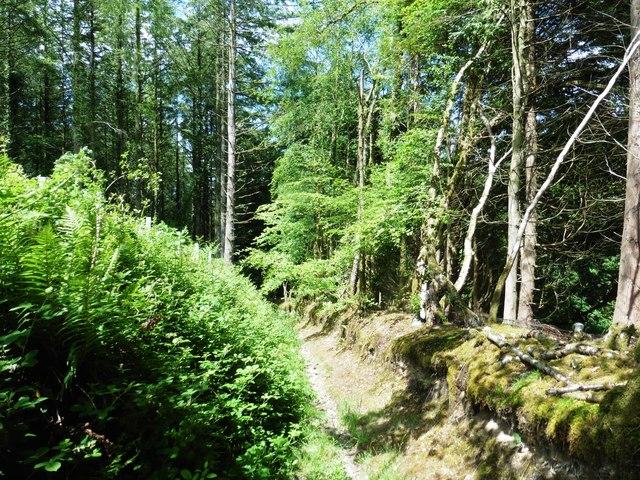 Bridleway in Higher Dean Wood