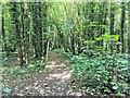 TV5598 : Footpath in Friston Forest by PAUL FARMER