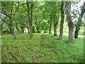 SE2732 : Path in St John's churchyard, Wortley, Leeds by Humphrey Bolton