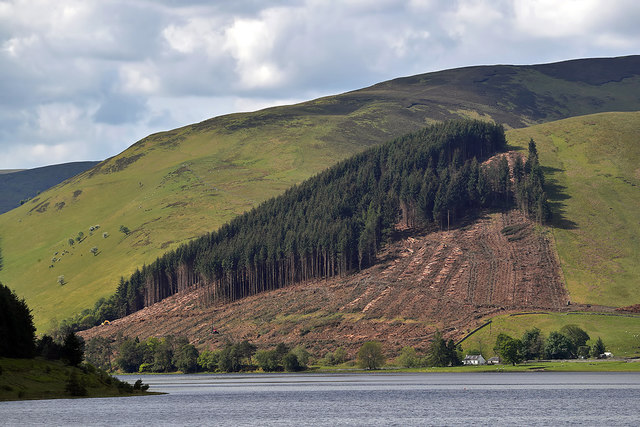 Forestry operations at Oxcleuch Rig