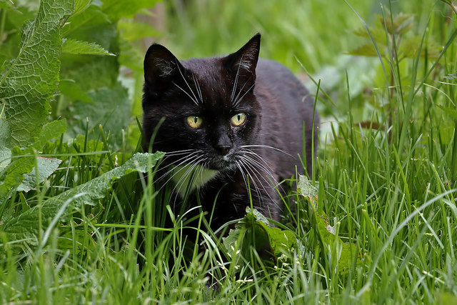 A black cat at Riskinhope Farm