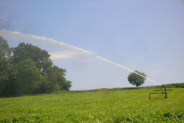 Crop irrigation near Neutral Farm, Mill Lane