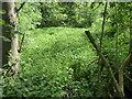 TQ5053 : Former mill pond in Mill Bank Wood by Marathon