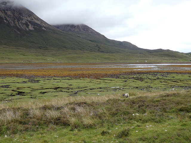 Salt marsh at the head of Loch Slapin