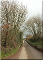 SX8355 : Lane to East Cornworthy by Derek Harper
