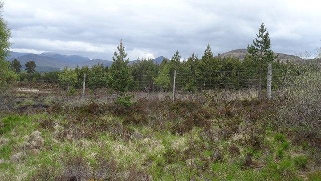 Woodland near the Raeburn Hut