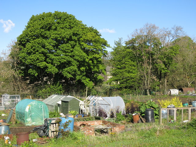 Allotments in Westgate