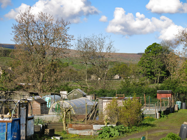 Allotments in Westgate (2)