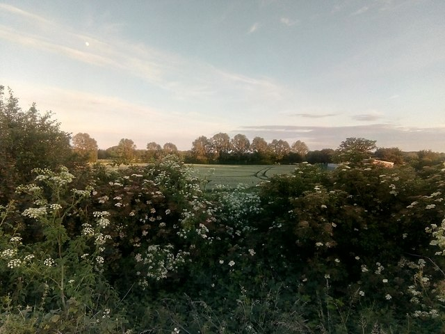 Looking south into a field off the Witham bypass