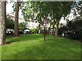 TQ2879 : Wilton Crescent garden by David Hawgood