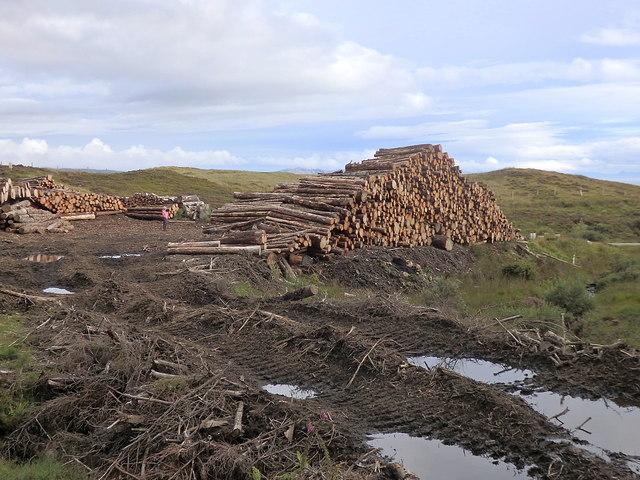 Timber stacks, Keppoch