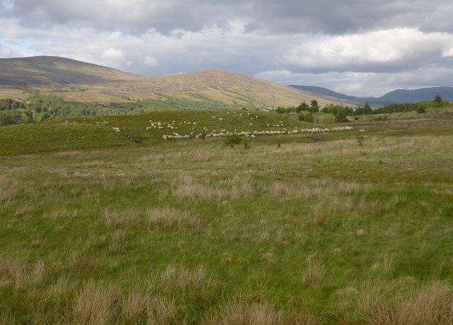 Rough grazing, by Leanachan