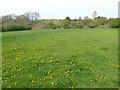 SE2917 : Dandelion field by the river Calder by Stephen Craven