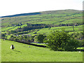 NY9038 : Upper Weardale around Westgate (2) by Mike Quinn