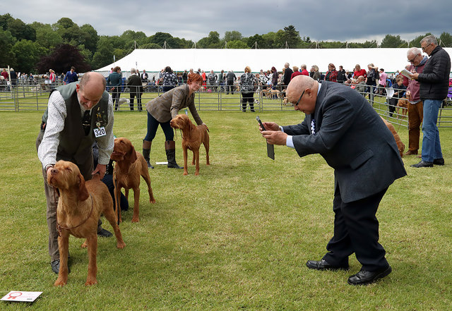 The 2019 Kelso Dog Show