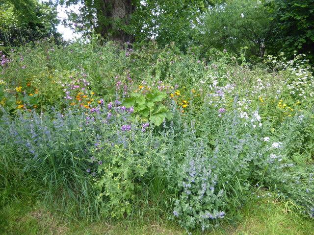 Wild flowers in the Eden Garden, Clapham
