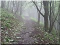 SO7642 : Misty woodland path by Philip Halling