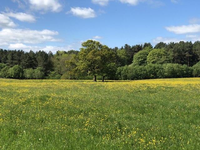 Pickard's Meadow