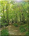 TQ7512 : Pathway in Fore Wood RSPB Reserve by PAUL FARMER