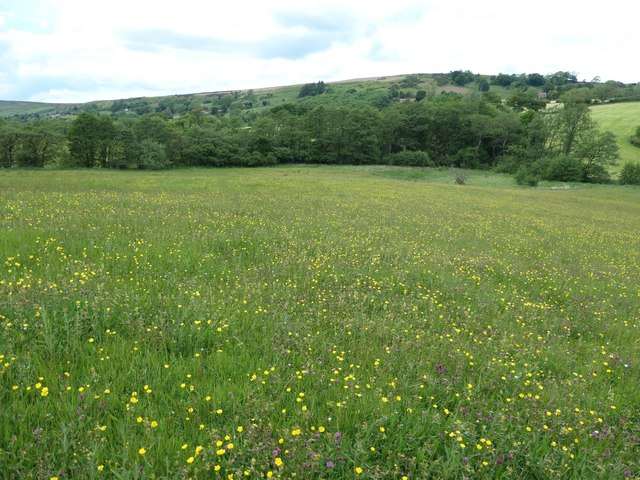 Meadow on the south bank of Glaisdale Beck
