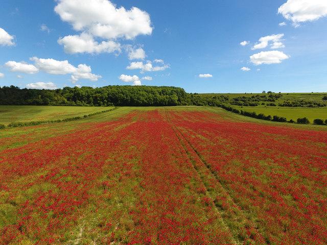 Poppy field below Fawley Down