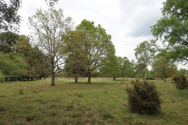 Tuddenham Heath