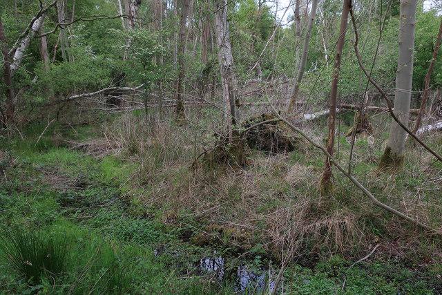 Wet woodland, Tuddenham Heath