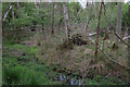 TL7472 : Wet woodland, Tuddenham Heath by Hugh Venables