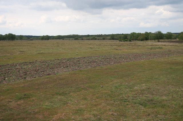 Rotivated ground, Cavenham Heath