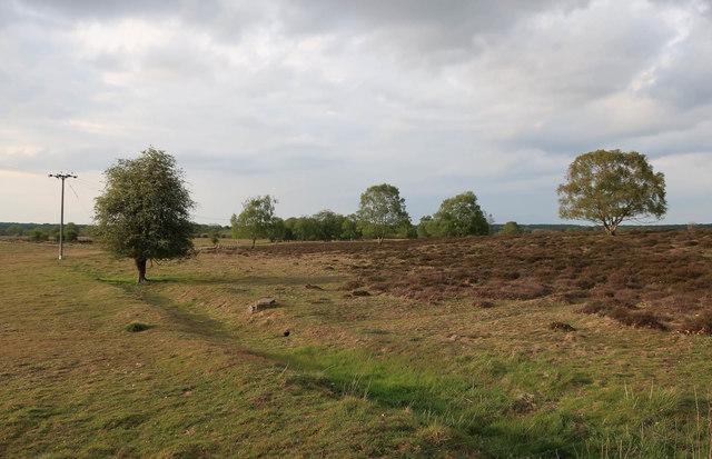 Cavenham Heath