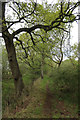 TL7473 : Reserve path, Tuddenham Heath by Hugh Venables